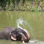 elephants-1056266